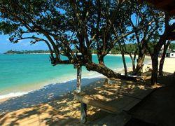 L'essentiel du Sri Lanka et la Perahera en six jours