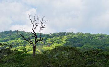 extension safari : sites naturels de Horton Plains et Yala en cinq jours