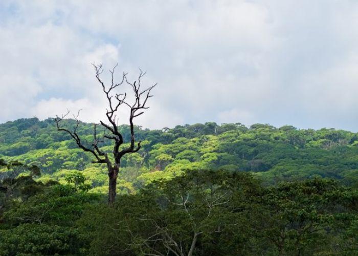 Voyage au Sri Lanka: exploration Horton Plains et Yala en cinq jours