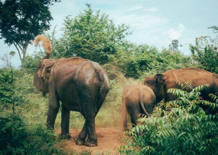 Séjour organisé au Sri Lanka:  Kuda Oya et Udawalawe en quatre jours