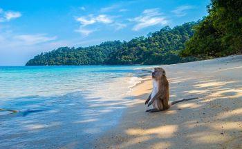 Voyage en Thaïlande: Les plages