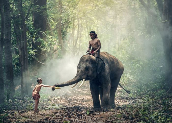 Voyage en Thaïlande : trekking à Chiang Maï en deux jours
