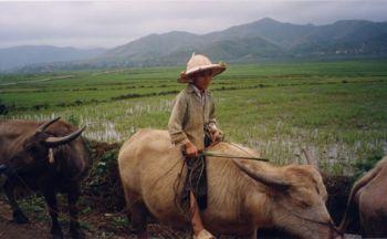 Voyage découverte du Viêt Nam, du nord au sud en dix-sept jours