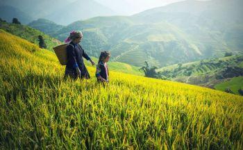 Circuit individuel Vietnam : Découverte du Nord Vietnam en été en treize jours