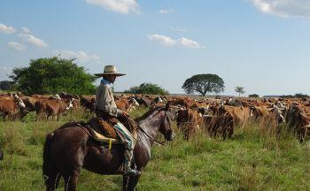 Voyage Argentine : Les Gauchos