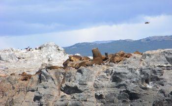 Autotour en Argentine : Extension dans la péninsule de Valdes en trois jours