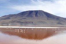 Séjour Bolivie: Laguna Colorada et Laguna Verde