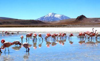 Voyagiste Bolivie : Quel circuit en individuel ?