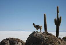 Voyage sur-mesure en Bolivie (que voir, que faire) ?