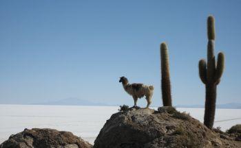 Circuit sur-mesure en Bolivie : les essentiels en treize jours