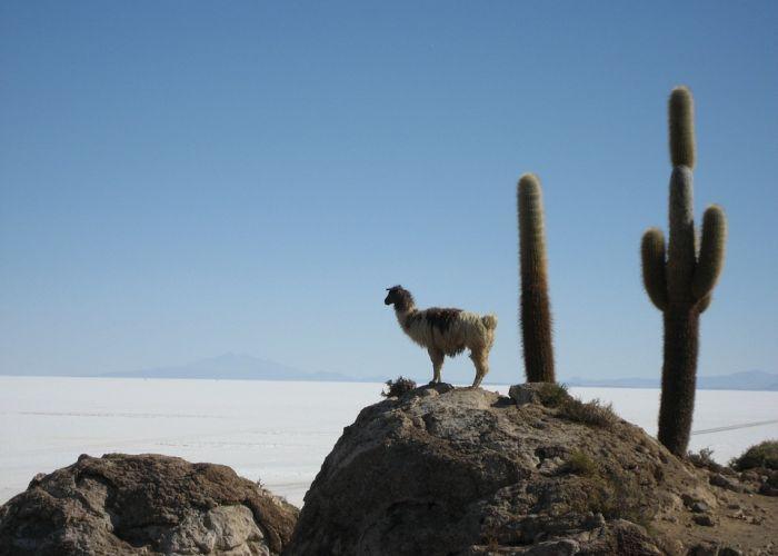 Essentiels de la Bolivie en douze jours