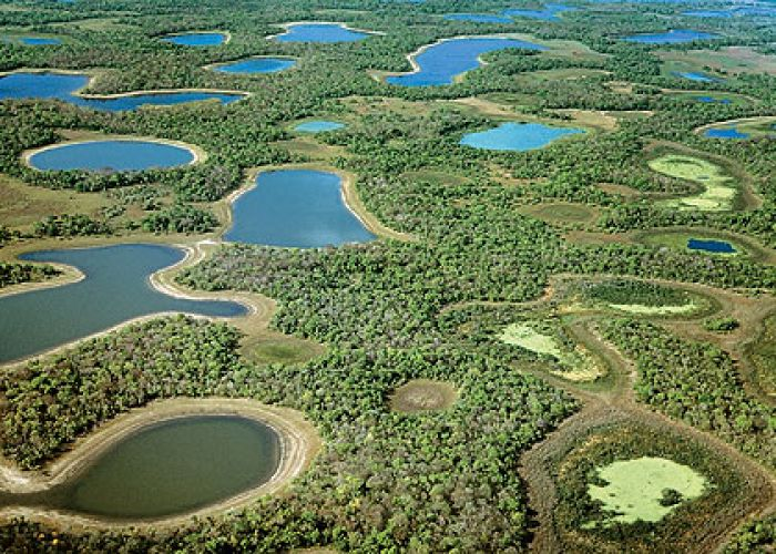 Voyage Brésil : Extension dans Pantanal Sul en six jours