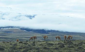 Croisière Chili et Argentine : Patagonie et Australis en 24 jours