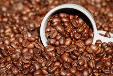 Une finca de café? En Colombie por favor