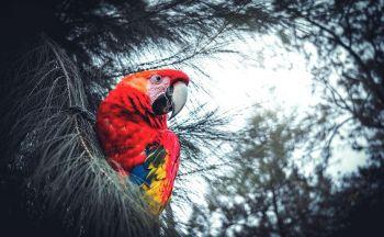 Trek Colombie : Extension Randonnée à la Ciudad Perdida en 7 jours