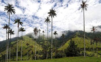 Voyage sur mesure Colombie : Extension dans la région du café en cinq jours