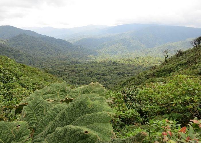 Voyage au Costa Rica, le paradis vert!