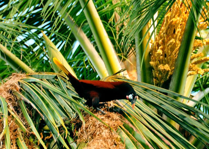 Extension tropicale à Monteverde en trois jours