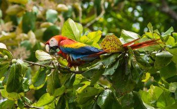 Voyage sur mesure Costa Rica : Sites incontournables du birdwatching en seize jours