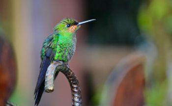 Circuit sur-mesure au Costa Rica : Monteverde en trois jours