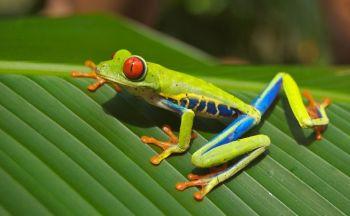 Découverte du Costa Rica en vingt quatre jours