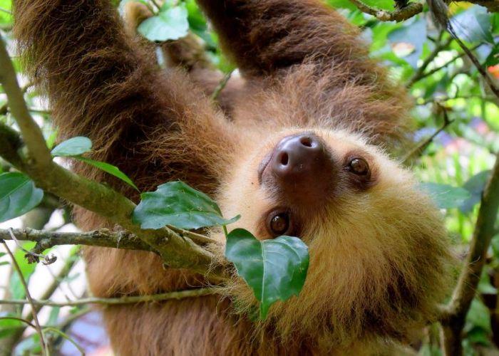 La découverte du Costa Rica en navettes et en dix jours