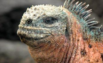Extension aux Galápagos en six jours