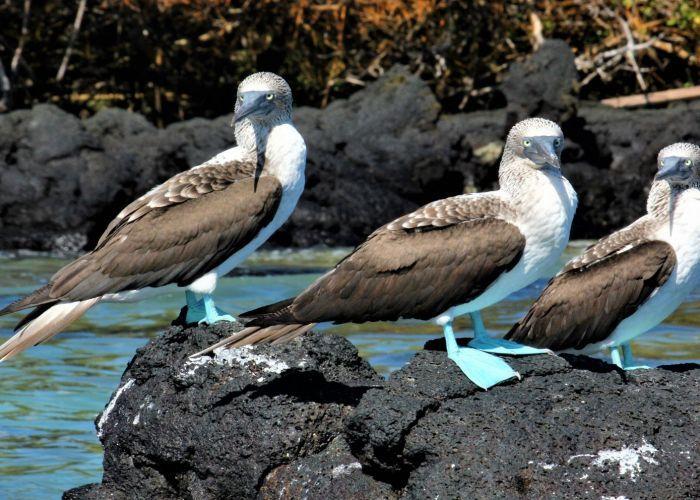 Quito et les îles Galápagos en huit jours