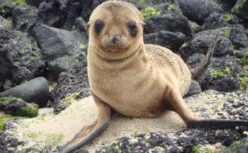 Séjour Equateur : Découverte de l'archipel des Galapagos en 7 jours