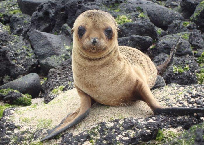 Découverte de l'archipel des Galapagos en sept jours