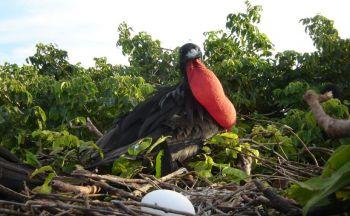 Voyage individuel Guatemala : Extension dans le Petén en deux jours