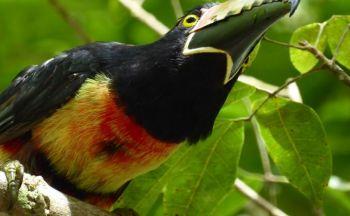 Voyage découverte du Guatémala et extension à Coban en dix huit jours