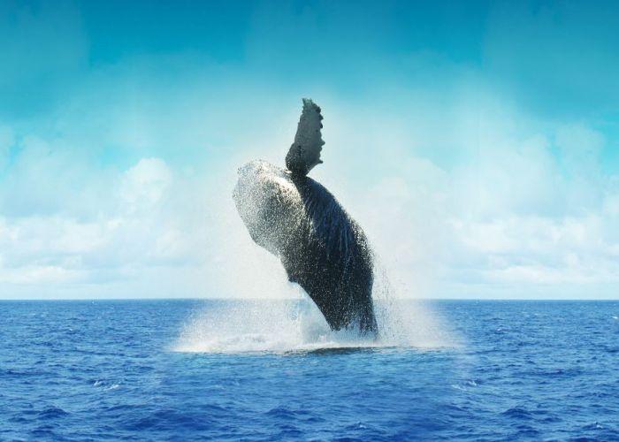 Voyage sur mesure Mexique : Extension à la rencontre des baleines grises en huit jours