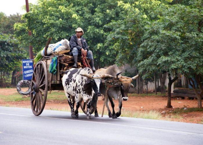Vacances au Paraguay : fugue verte à El Chaco en sept jours
