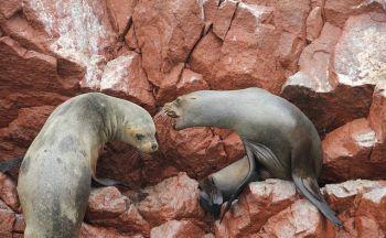 Voyage au Pérou: Parc national de Manú