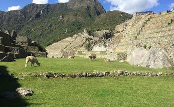 Voyage au Pérou: Sanctuaire historique de Machu Picchu