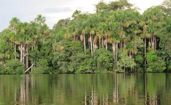 Voyage au Pérou : Parc National de Manú