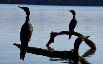 Séjour Pérou : Extension en Amazonie à Puerto Maldonado en quatre jours