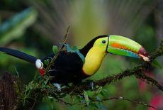 Costa Rica Actus