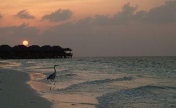 Voyage découverte du Sri Lanka et extension balnéaire aux Maldives en quinze jours