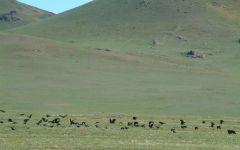 Extension dans le désert de Gobi
