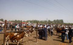 Voyage découverte Kazkhastan