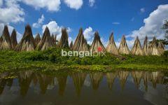 Extension au Bangladesh, le pays du thé
