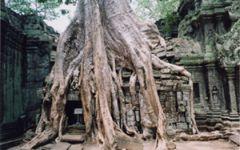 La fantaisie des temples au fil du Mékong en Estampe, 15 jours/12 nuits