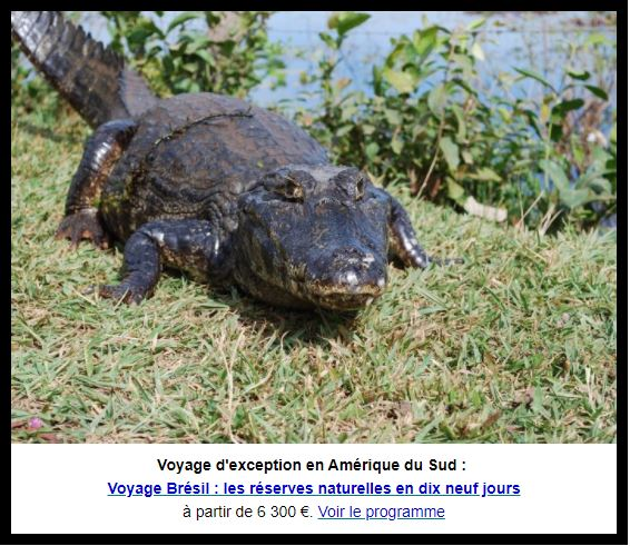 Voyage Brésil : les réserves naturelles en dix neuf jours