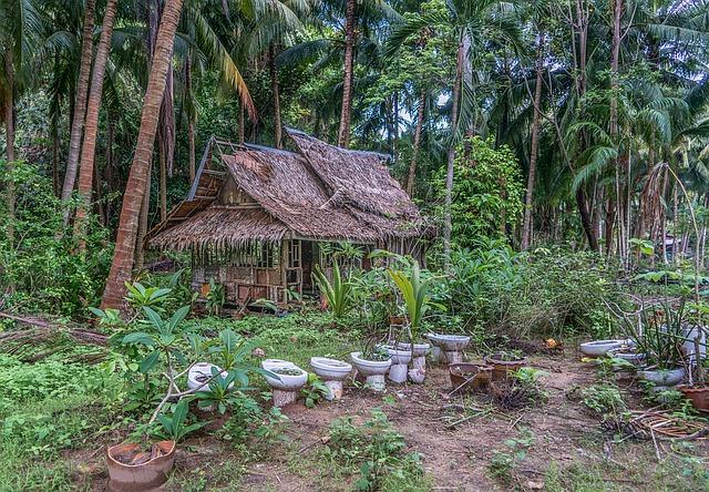 Trekking Thaïlande : Le complexe forestier de Dong Phayayen-Khao Yai